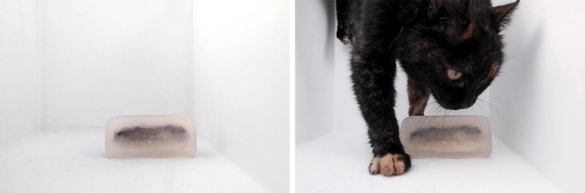 "zweintopf,""It´s raining cats and dogs"", 2015."